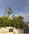 113015_0141_TheStThomas1.png